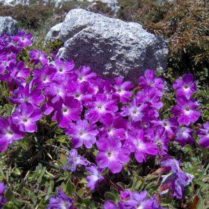 Il Giardino Botanico Alpino del Cansiglio